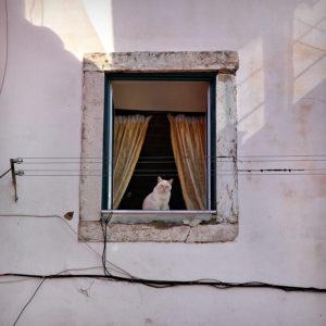 "Portugal17 - ""Neighborhood Watch"""