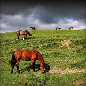 "Ireland 20 - ""Irish Mustangs"", Co. Clare"