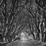 BW-055 - The Dark Hedges, Ballymoney