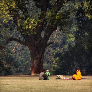 India 33 - Family Tree