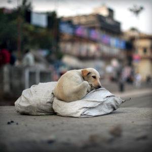 India 17 - Sleepyhead