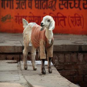 India 23 - Icon of Style