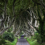 "Ireland 11 - ""Red Riding Hood"" Vol.1, The Dark Hedges, Ballymoney"