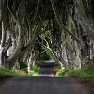 "Ireland 30 - ""Red Riding Hood"" Vol.2, The Dark Hedges, Ballymoney"
