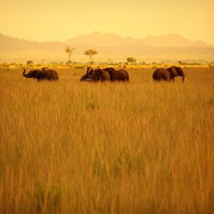 Tanzania02