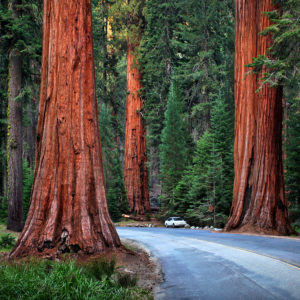 USA 22 - Sequoia National Park