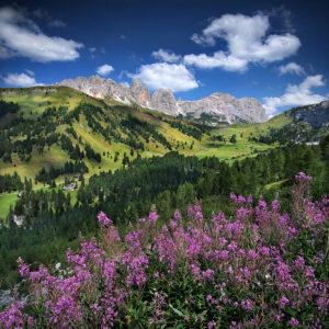 """Dolomites27 - """"Alpine Summer"""""""