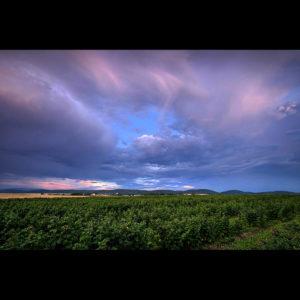 "Poland10 - ""Fields of Green"" - Somewhere in Poland"