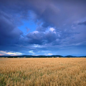 """Poland06 - """"Fields of Gold"""" - Somewhere in Poland"""