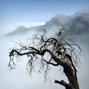 "Madeira, Pico do Arieiro - ""Ancient Tree"""
